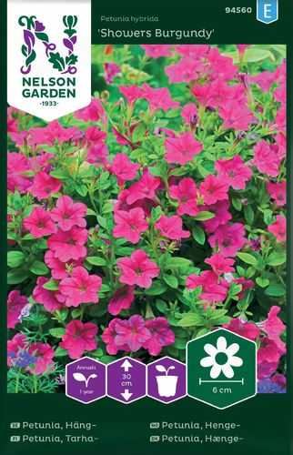 Petunia, Tarha- 'Showers Burgundy'