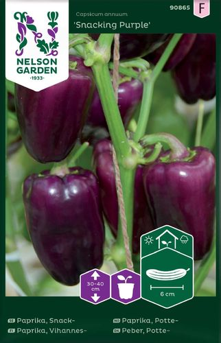 Paprika, Vihannes- 'Snacking Purple'