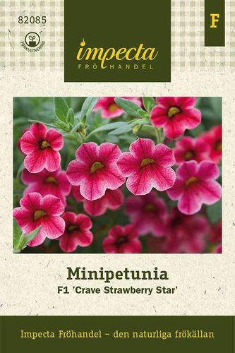 Pikkupetunia 'Crave Strawberry Star' F1